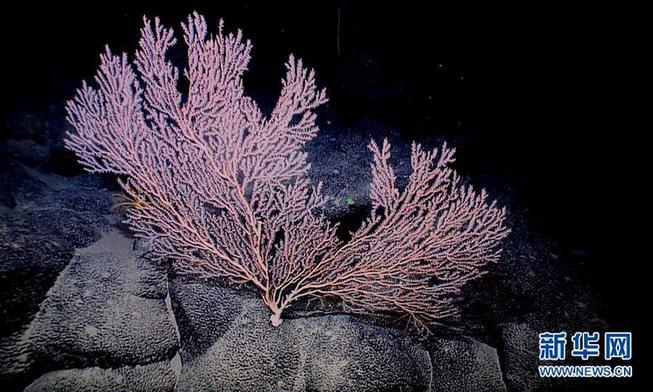 """(XHDW)(1)西太平洋的""""海底花园"""""""